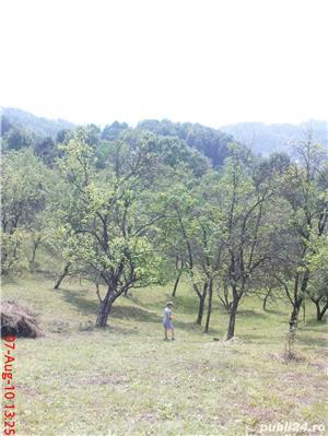 teren Runcu - imagine 2