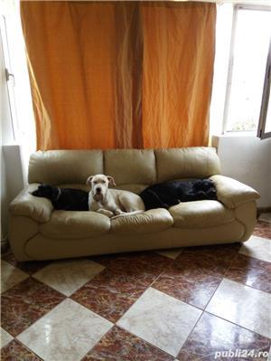 Dresaj canin ,27 ani experienta in domeniu - imagine 4