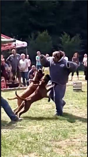 Dresaj canin ,27 ani experienta in domeniu - imagine 5