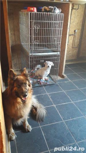 Dresaj canin ,27 ani experienta in domeniu - imagine 6