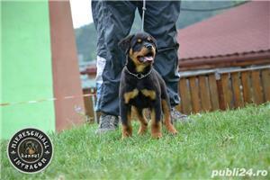 Pui Rottweiler parinti campioni - imagine 6