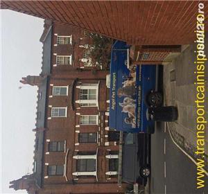 Transport Caini si Pisici Autorizat din Romania catre Anglia - imagine 2