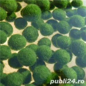 Cladophora planta acvariu pesti creveti - imagine 2