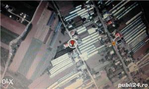 TEREN INTRAVILAN 1250M Dobreni 2 km comuna Berceni  10 KM BUCURESTI - imagine 3