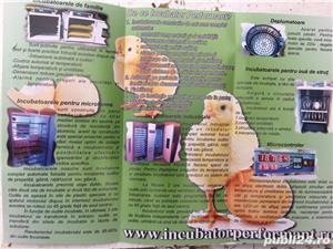incubator oua automat - imagine 4