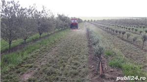 Vand teren / Plantatie / ferma Catina  - imagine 3