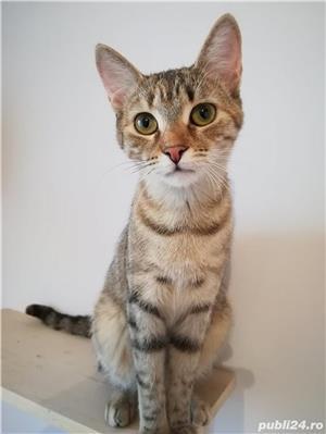 Mihaela, o tigrisoara deosebita, pentru adoptie cu iubire - imagine 1