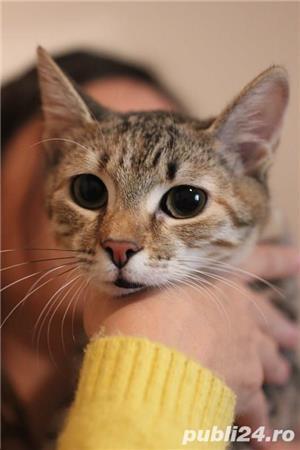 Mihaela, o tigrisoara deosebita, pentru adoptie cu iubire - imagine 4