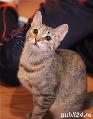 Mihaela, o tigrisoara deosebita, pentru adoptie cu iubire - imagine 2