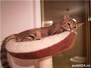 Mihaela, o tigrisoara deosebita, pentru adoptie cu iubire - imagine 5