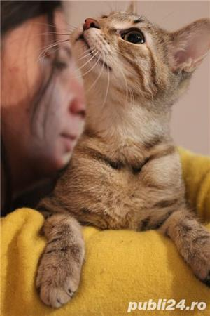 Mihaela, o tigrisoara deosebita, pentru adoptie cu iubire - imagine 3