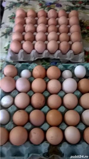 oua pentru incubat - imagine 5
