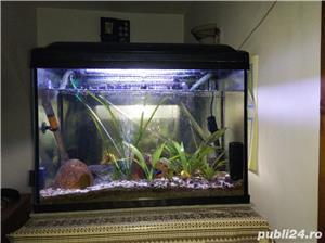 Vand ciclide, acvarii, filtru extern si intern - imagine 2
