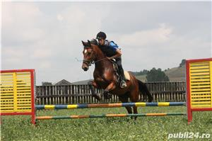 SHABA(cal sport romanesc) - imagine 2