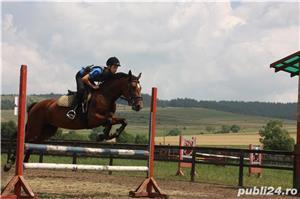 SHABA(cal sport romanesc) - imagine 5