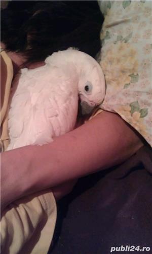 Papagali Kakadu - imagine 6