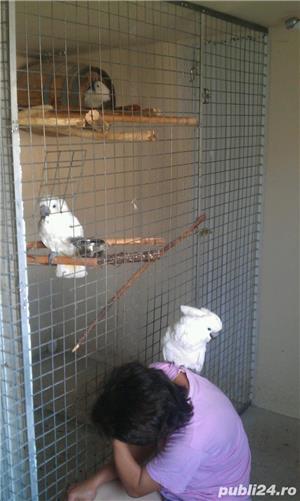 Papagali Kakadu - imagine 9