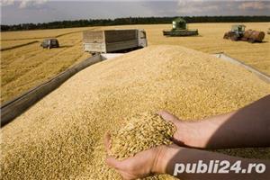 Jud Giurgiu, teren agricol - imagine 4