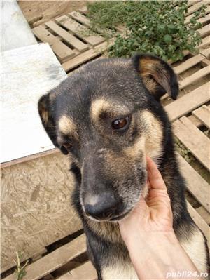 Kiko, catelul cu ochii de caramel - imagine 4