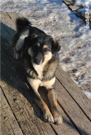 Kiko, catelul cu ochii de caramel - imagine 1
