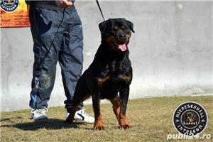 Femela Rottweiler - imagine 3