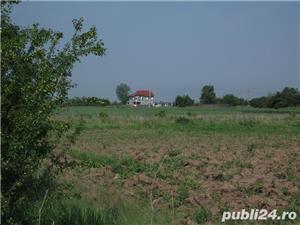 vand teren 5000mp in  sat Tantava, jud.Giurgiu - imagine 3
