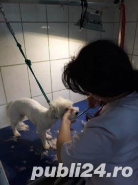 Toaletaj canin  - imagine 2