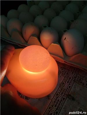 """oua''La Bresse""""-caviarul gainilor - imagine 8"""