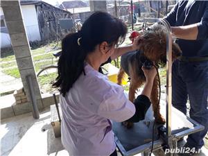 Toaletaj canin  - imagine 4