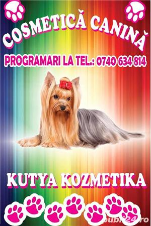 Salon cosmetica canina Satu Mare Closca - Kutya Kozmetika - imagine 1