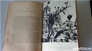 Frescele din Tassili,Henri Lhote 1966  - imagine 8