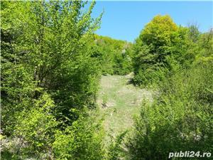 Provita, teren pt casa de vacanta, 7500 mp, priveliste mirifica - imagine 8