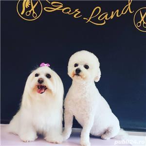 Angajam frizer canin - imagine 1