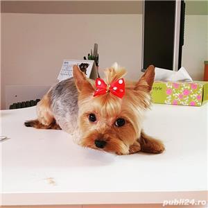 Angajam frizer canin - imagine 3
