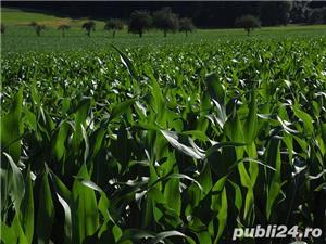 Teren agricol - imagine 2