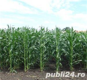 Teren agricol - imagine 1