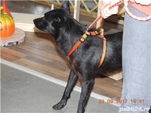 Reth, lupoaica voioasa pentru adoptie - imagine 4