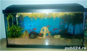 Vand acvariu 54L - imagine 4