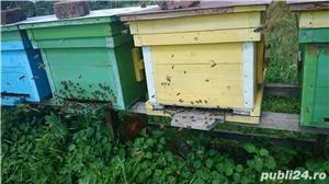 Vand familii albine!!! - imagine 1
