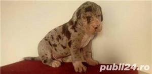 Vand dog german!! - imagine 2