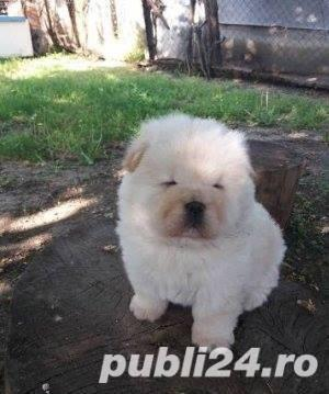 vand chow chow!! - imagine 1