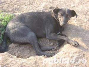 Tango, pufosul cu blana neagra pentru adoptie - imagine 2