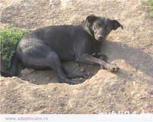 Tango, pufosul cu blana neagra pentru adoptie - imagine 3
