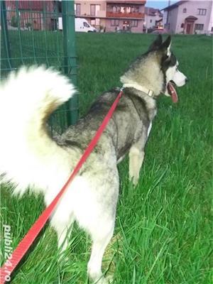 Imperechere Husky - imagine 6