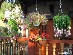 Locatie turistica Baile Tusnad - vanzare - imagine 10