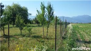 Vand teren la Sasciori, jud.Brasov - 5 bazine piscicultura, curent electric - imagine 6