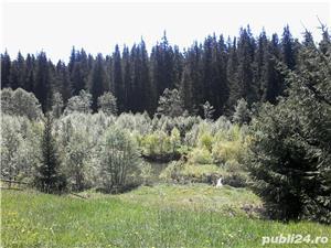 inchiriez  vila ,7camere, pentru relaxare  in natura la munte IN BUCOVINA - imagine 6