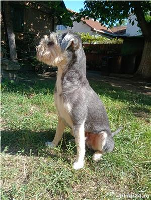 Monta Terrier Mascul - imagine 2