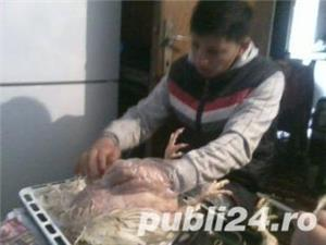 Pui de carne taiati  - imagine 1