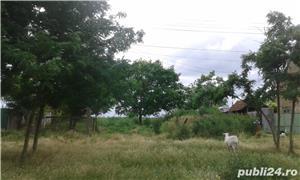 Teren pentru casa in Grabat, com Lenauheim 662 mp 6600 Euro, negociabil - imagine 3